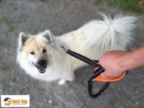 Hundeleine Best Dog reflektierend mit Ruckdämpfer für große Hunde – mit weichen Neopren-Griffen - 4