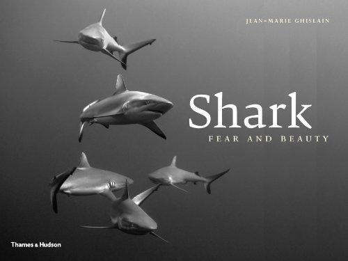 Shark: Fear and Beauty