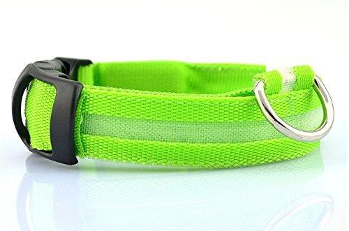 GODHL Sicurezza di notte del cane ha portato collare collare di Nylon luce lampeggiante (verde, M) - Go Go Animali Set