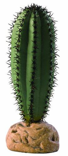 (Kaktus Dekor)
