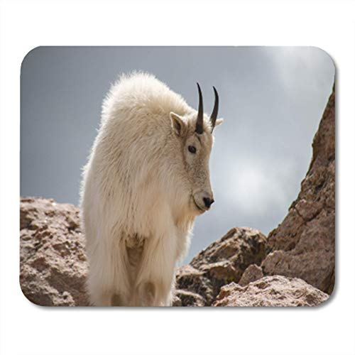 Gaming Mauspad Alpine Rocky Mountain Goat Altitude Animal Beautiful Climb Colorado Fur 11.8
