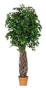 Ficus Mini - Artificiale - Tronco Vero Jumbo Liana - H.167 cm