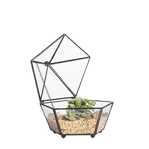 Venus Terrarium (ncyp Kleine Pentagon Form Glas Geometrische Sukkulente Terrarium Fensterbank Pflanze Übertopf Moos Farn Blumentopf mit Swing Deckel Füße Schöne Einrichtung Mittelpunkt für Hochzeit kaffee Tisch)