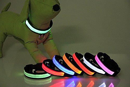 Dogsie leuchtendes LED Hundehalsband / Leuchthalsband in M,L,XL / verschiedene Farben / leuchtend oder blinkend / Halsband (L, Rot)