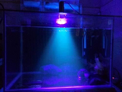 Aquarium Licht LED Vollspektrum Korallenriff Pflanze Wachsen