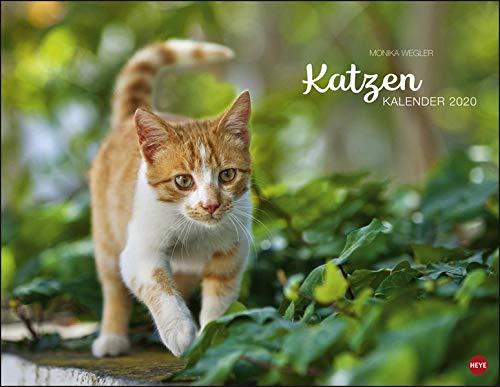 Katzenkalender 2020 44x34cm