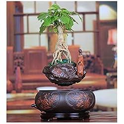 Yajun LevitacióN Macetero Flotante Pot Air Bonsai En Maceta Adornos Siembra DecoracióN Regalo 360 Grados De RotacióN Planta Creativa Oficina Escritorio Escritorio Regalo,B