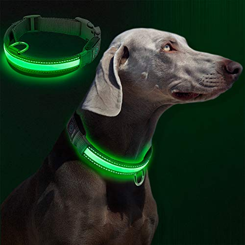 Raffaelo Collare LED per Cani, Collare LED per Cani di Sicurezza di Nylon Luminoso Notte Dog Band con USB Collare Ricaricabile Glow Sicurezza Luminoso per Cani (M-40-50CM)
