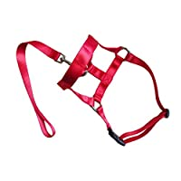 Behavetw Dog Field Anti-Pull Rope Lead/Halter Head Collar Harness Soft Cotton Rope Gentle Halter Leash Leader for Training Dogs(S,#3)