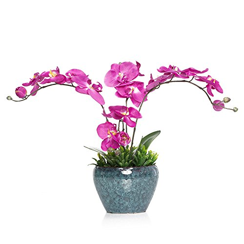 lumen Kreative Pflanzen Topfpflanzen Home Decoration Kit, Purple Orchid (Herbst-tabelle Mittelstücke)