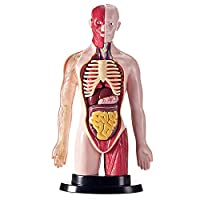LUCKFY Human Torso Body Anatomy Model Heart Brain Skeleton Puzzle Assembly Toy Kids Science Biology Learning Teach Kit