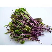 Virtue hon tsai tai Seeds - Purple Choy Sum (kosaitai) Plant Early Spring, Summer/Fall