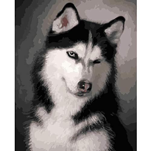 Nette Husky Hund Tier DIY Digitale Malerei by Zahlen Moderne Wandkunst Leinwand Malerei Einzigartiges Geschenk Wohnkultur 40X50 cm DIY Rahmen (Husky-starter-kit)