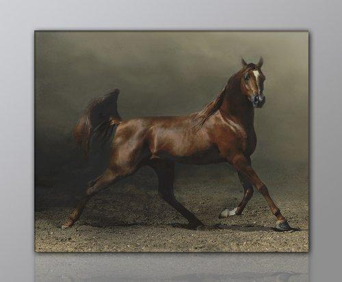WILD Leinwandbild Bilder Pferd Pferdebild (horse-40x60cm) Hengst Pferde auf Leinwand gerahmt - Bilder fertig gerahmt mit Keilrahmen riesig. Ausführung Kunstdruck auf Leinwand. Günstig inkl Rahmen