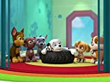 Paw patrol amazon prime
