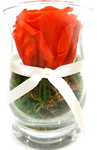 Rosen-te-amo Konservierte Rosen – ECHTE Blumen-Gesteck 3 JAHRE haltbar OHNE WASSER - Blumen-Strauß in der Vase aus PREMIUM Haltbare Rosen – unser EXKLUSIVES Blumen-Arrangement ist handgemacht und mit Liebe gefertigt (Oval-Zylindrisch H: 9cm B: 7,5 cm, Orange)