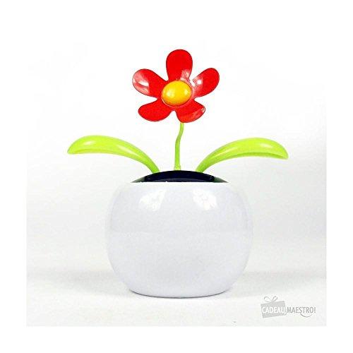 Plante Solaire Flip Flap - Cadeau Maestro
