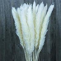 30 Pcs Natural Dried Flowers Pampas Grass,Wedding Flower Bunch,Phragmites Communis Bouquet for Floral Arrangements Home Decor