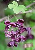 Es rankt, klettert und blüht (Wandkalender 2019 DIN A3 hoch): Eine Auswahl besonderer Kletterpflanzen für Ihren Garten (Monatskalender, 14 Seiten ) (CALVENDO Natur)