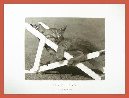David McEnery Cat Nap Poster Kunstdruck Bild mit Holz Rahmen in Orange 84.8x64.8cm - Kostenloser Versand (Orange Cat-bild-rahmen)