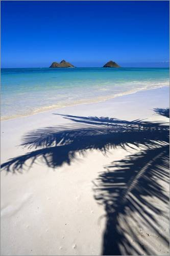 Posterlounge Acrylglasbild 80 x 120 cm: Palm Schatten auf Lanikai Beach von Douglas Peebles/Danita...