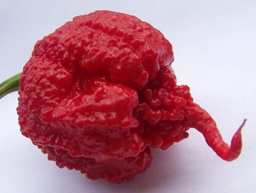 Chili Carolina Reaper - Piment Carolina Reaper - 10 graines