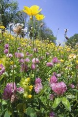 just-seed-wild-flower-flowering-meadow-mix-for-clay-soils-4g-with-grass