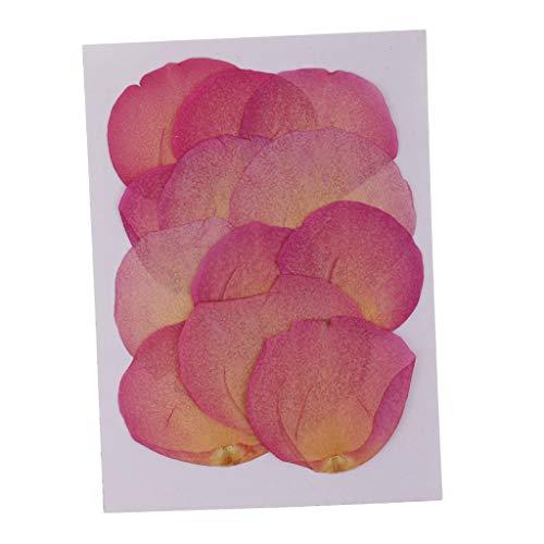 FLAMEER 12 Stück Echte Getrocknete Blumen Rosenblätter Für DIY Anhänger Schmuck Machen Rosa - Getrocknete Rosa Rosenblätter