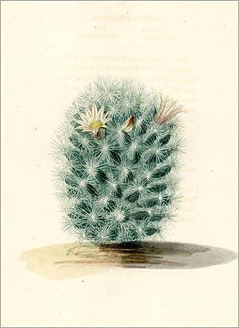 Forex 50 x 70 cm: Baja organ pipe cactus, Stenocereus stellatus. de Fotofinder.com