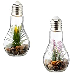 2er Set Sukkulenten LED Glühbirne Glas B x H: 8x19cm Deko Lampe Kunstpflanze Grün Rosa Hängelampe Tischdeko