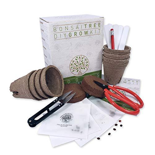 Kit De Árbol Bonsái | Set Cultivo Con 4 Paquetes De Semillas Variadas de Bonsái