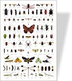 Minibeasts / Bugs Educational Poster - over 100 Common Minibeast images