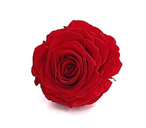 Rosenbox Blüht dank schonender Konservierung mehrere Jahre lang