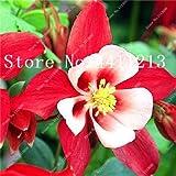 IDEA HIGH Seeds-200 pcs/Bag Hardy Plant schöne Aquilegia Blumen Farben gemischt Blume perenne Pflanze Bonsai, die Haus und Garten schmücken: 4