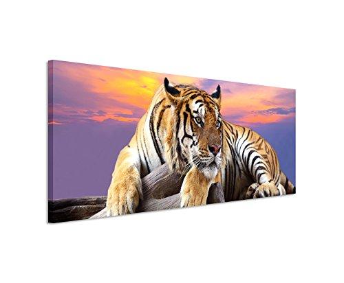 Bild 120x40cm Tierbilder – Liegender Tiger vor buntem Himmel