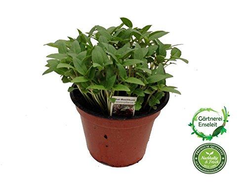 Thai-Basilikum, Marktfrische Pflanze