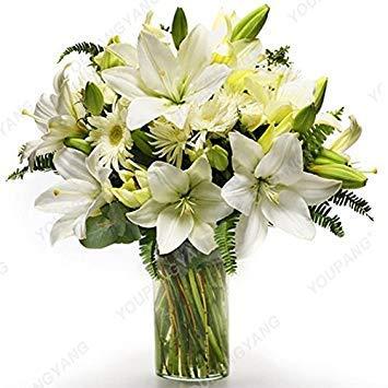 100 / sac blanc péruvien Lily Graines Lily Mix Pérou (Alstroemeria) Graines de fleurs vivaces pure pour les plantes Bonsai pour jardin Noir