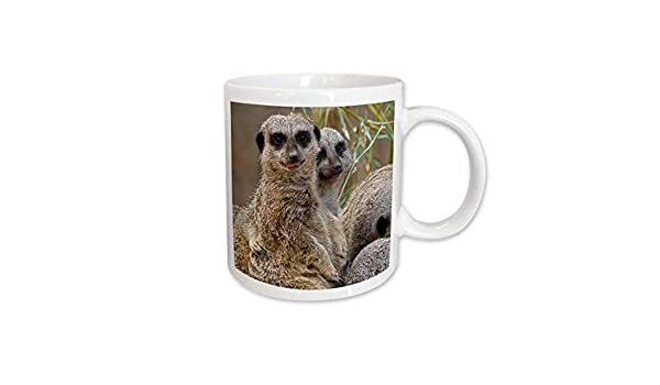 Buy 3drose 90366 1 Meerkats Zoo Louisville Kentucky Us18 Aje0298 Adam Jones Mug 11 Oz Online At Low Prices In India Amazon In