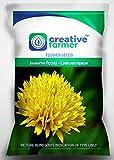 Semillas de flores para la BloomGreen Co. Gardenâ vertical Jamanthi Poovu - Semillas de la flor del crisantemo de jardinería - 1 paquete
