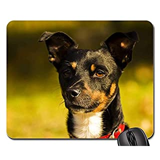 Mouse Pads - Dog Doggy Hunting Dog Hundeportrait Animal Sweet 1