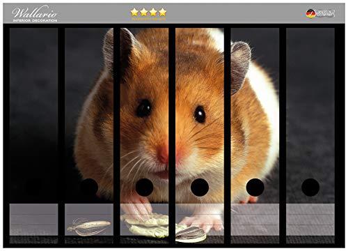 Wallario Ordnerrücken Sticker Putziger Hamster mit Nüssen zwischen den Pfoten in Premiumqualität - Größe 36 x 30 cm, passend für 6 breite Ordnerrücken (Hamster-ordner)