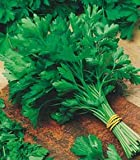 Premier Seeds Direct ORG053 Parsley Italian Giant Organic Seeds (Pack of 1600)