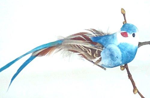 Vogel blau mit langem Federschweif im 12er Set