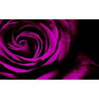 LARGE PURPLE ROSE CANVAS FLORAL ARTWORK BOX CANVAS READY TO HANG 34 X 20 INCHES preiswert