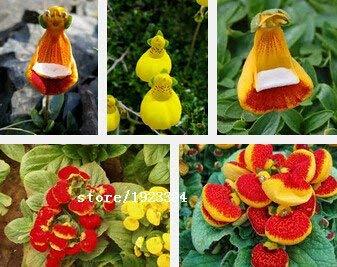 Fash lady confezione originale 30 particelle semi di melissa, semi di piante verdi, bonsai semi di menta al limone perenne
