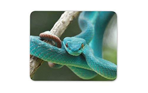 Schöne blaue Schlange Mauspad Pad - Exotische Schlangen Teal Geschenk PC Computer # 8295 - Exotische Vinyl