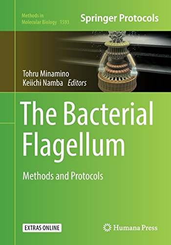 The Bacterial Flagellum: Methods and Protocols (Methods in Molecular Biology, Band 1593)