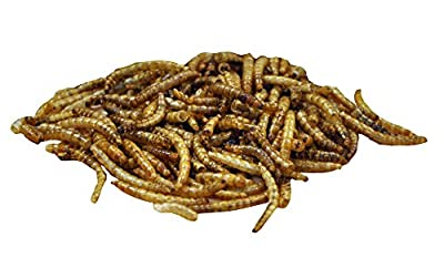 King Fisher Dried Mealworms Wild Bird Feed ,