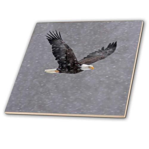 3dRose CT 87332_ 4Alaska, Chilkat-Bald Eagle wertvolle Bald Eagle US02bja0043JAYNES Galerie Keramik Fliesen, 30,5cm -