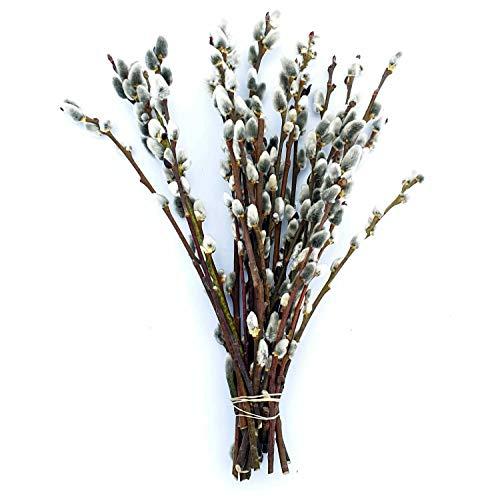 Dekozweig 25 Palmkätzchenzweige ca. 20-30 cm | Deko-Zweige für Vase | Weidenkätzchen im großen Bund | Frühlings-Deko | Frühlingszweige | Oster